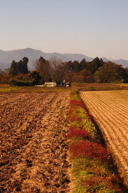 071025kaminoyama.jpg