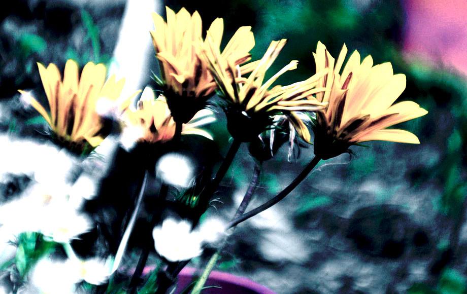 photo flowers #2